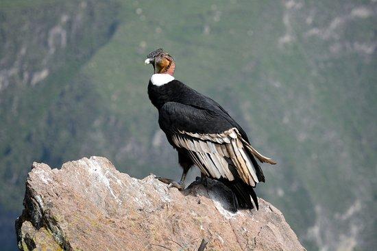 Fairaway.de condor-gewinnspiel