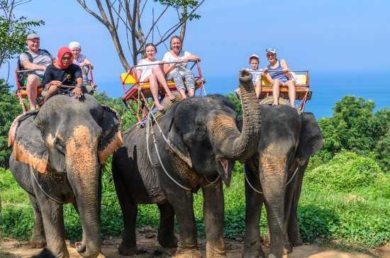 Image result for elephant trek phuket pic