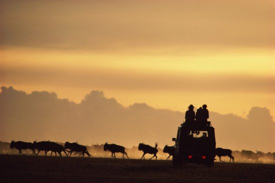 Tanzania Safari Vacation