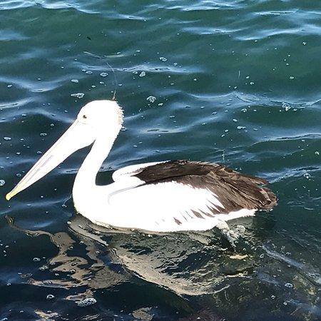 Corlette, أستراليا: photo2.jpg