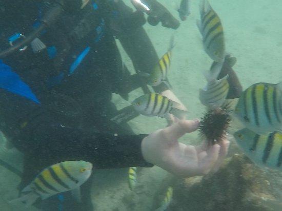 Bermuda Water Sport