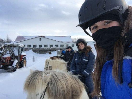 Riding Tours South Iceland: IMG-20180213-WA0020_large.jpg