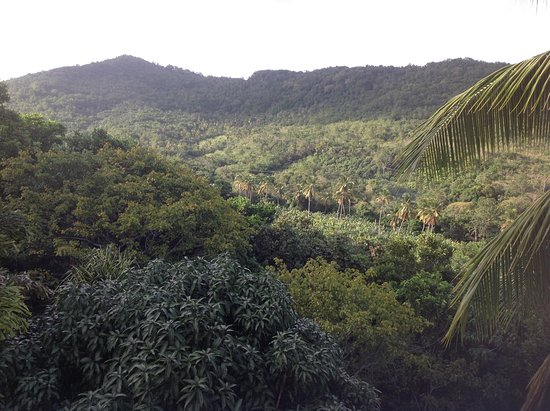 Praslin Quarter, Saint Lucia: View of the rainforest from the terrace