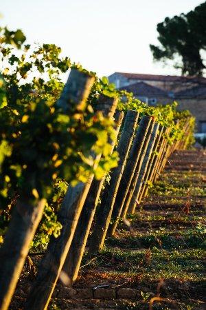 Servian, Frankreich: Une propriété comptant 200 hectares dont 100 autour du domaine