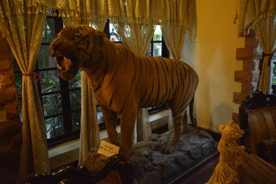Newtons Manor: TIGER TROPHY