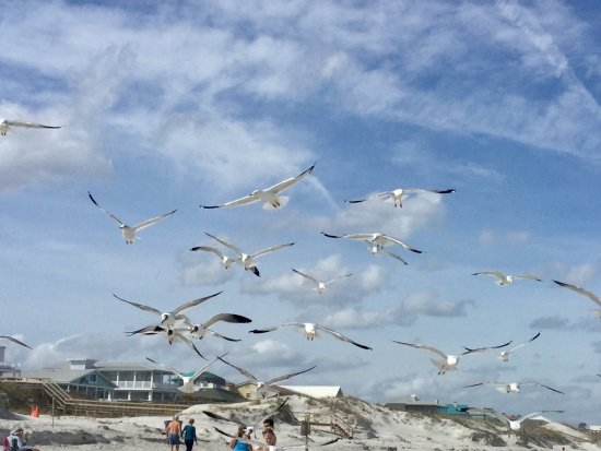 Crescent Beach, FL: Seagulls