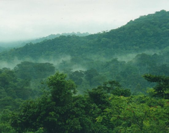 Nyungwe National Park : This is on of the best natural rain forests in Africa. Its located in the southern part of Rwand