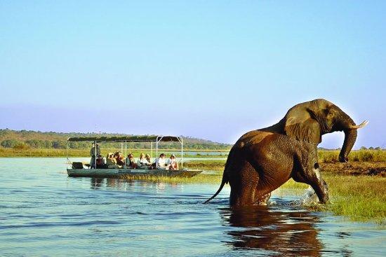 Victoria Falls, Zimbabwe: Boat Safari in Chobe Botswana