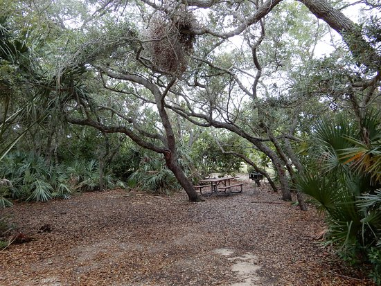 Jetty Park Campground: Tent campsite