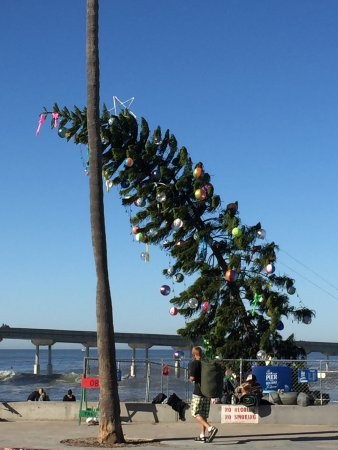 Cool Christmas Tree.Looking Out Patio At Cool Christmas Tree On Beach Picture