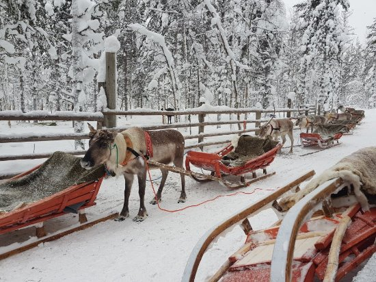 Ylitornio, Finland: 20180214_120955_large.jpg