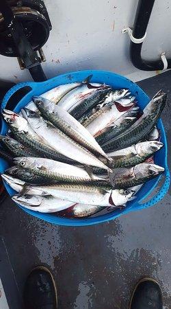 Brancaster Staithe, UK: mackerel