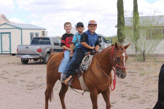 Portal, AZ: Our horses are versital