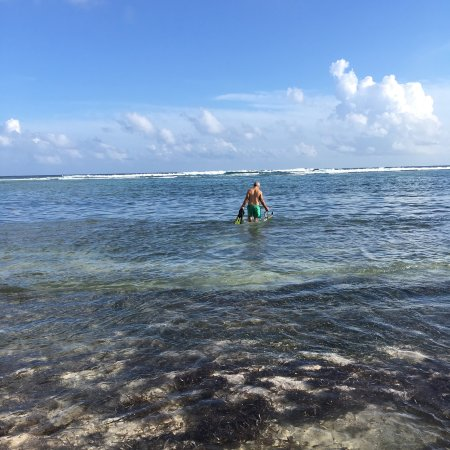 Sea Palm Villas: Snorkel off SPV beach