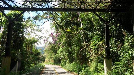 Estrada Real: Trecho arborizado