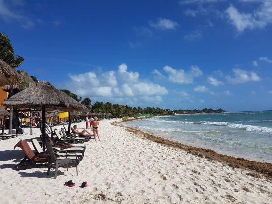 The Royal Haciendas All Suites Resort & Spa: Playa llena de algas