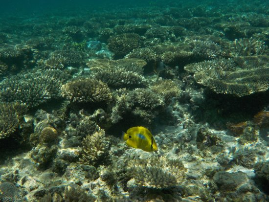 Oyster Stacks : snorkeling over the reef
