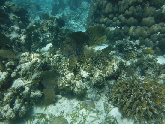Caye Caulker, Belize: wow