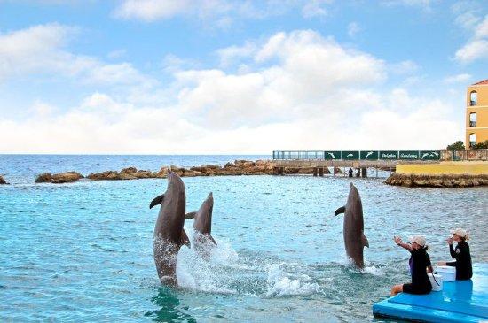Hilton Curacao : Other