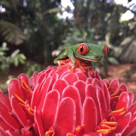 Horquetas, Costa Rica: photo1.jpg