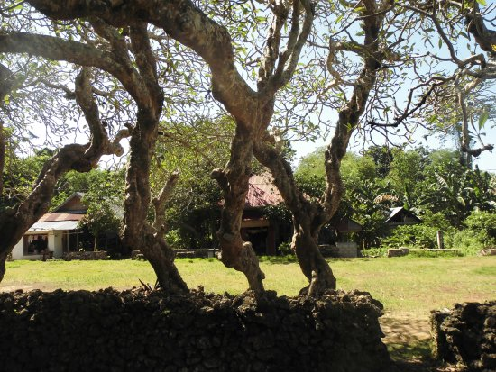 Liya Togo Traditional Village: centuries old Frangipani trees