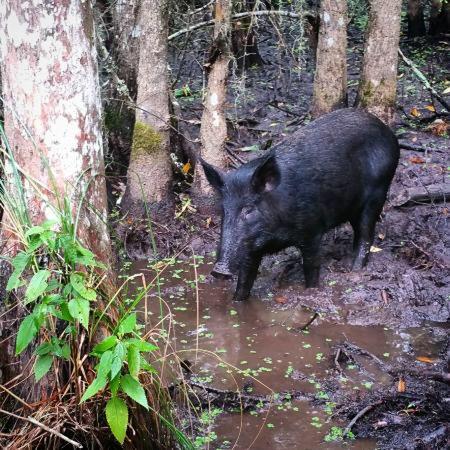 Dr. Wagner's Honey Island Swamp Tours : photo2.jpg