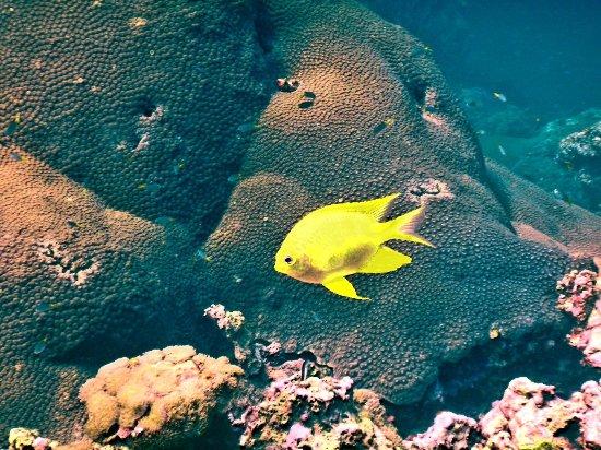 Hidden Depths Diving : 20180213_212646_large.jpg