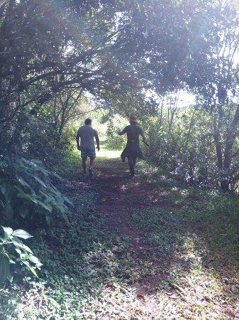 Andresito, Argentina: Senderos de selva