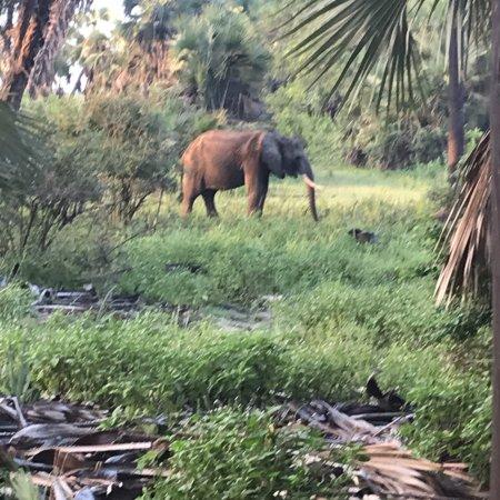 Lake Manze Tented Camp, Selous Game Reserve