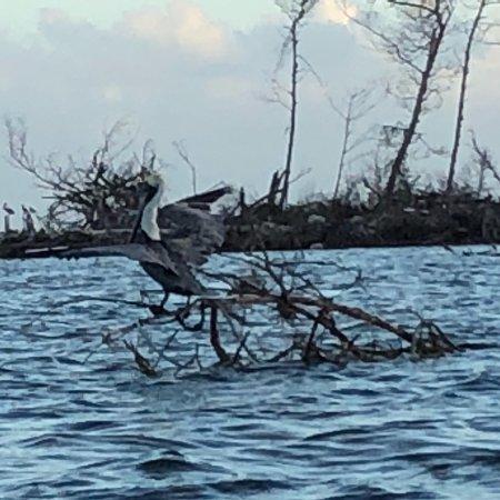Big Pine Kayak Adventures: photo6.jpg