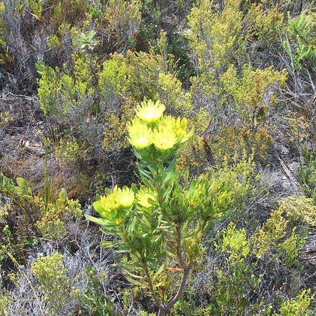 Hermanus, South Africa: photo6.jpg
