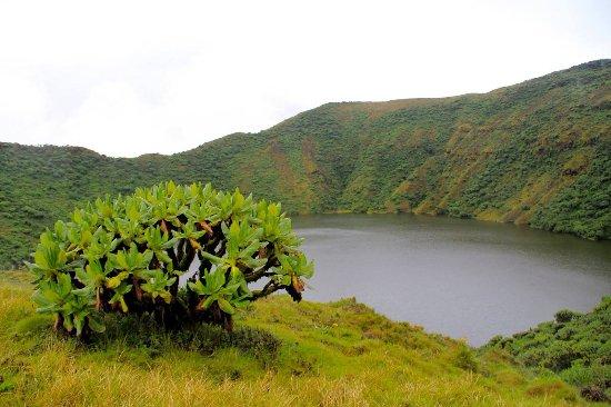 写真Volcanoes National Park枚