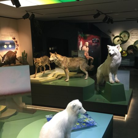 Museum of Natural History (Le Natur Musee Au Grund): photo0.jpg