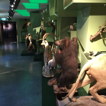 Museum of Natural History (Le Natur Musee Au Grund): photo1.jpg