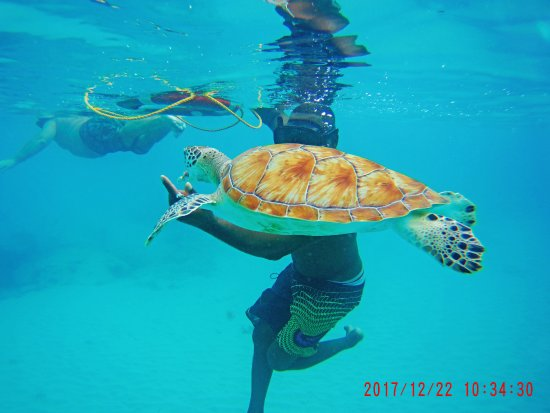 St. James, Barbados: Friendly Turtle