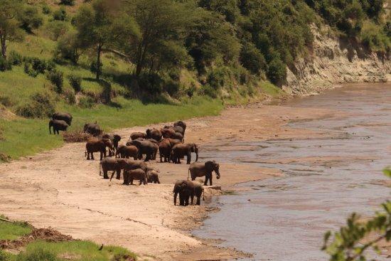 Tarangire National Park, Tanzânia: photo0.jpg