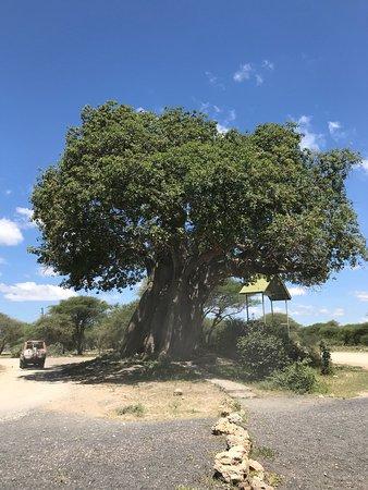 Tarangire National Park, Tanzânia: photo1.jpg