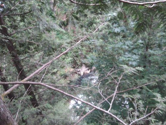 North Vancouver, Canadá: a vuelo de pajaro en las copas de los arboles
