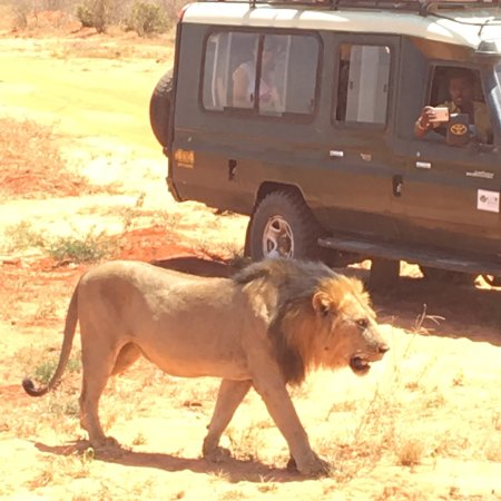 Giornale Kenya Safari - Day Tours Fotografie