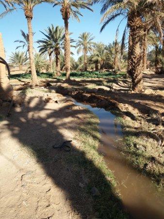 Merzouga, Morocco: L'irrigation des parcelles. Sous les palmiers, on fait pousser la luzerne mais aussi les légumes