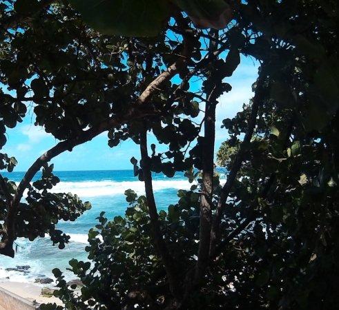 Paia, HI: view through the trees