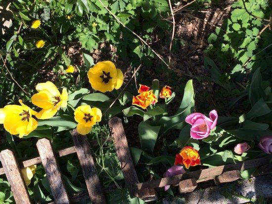 Luzzara, Italia: Particolare del giardino interno alla struttura