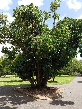 Adelaide Botanic Garden: 20180215_120622_large.jpg