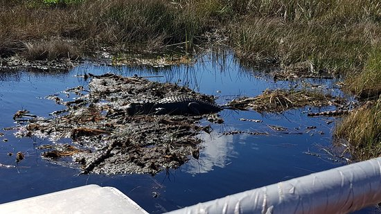 Buffalo Tiger's Airboat Tours : 20180215_105159_large.jpg