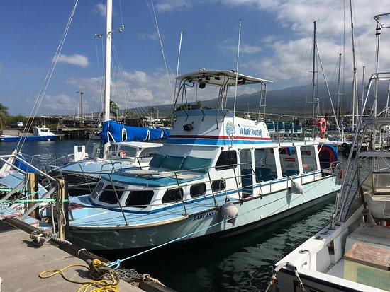 Holualoa, Hawái: Tour boat in the harbor before trip.