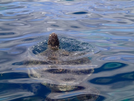 Watching a turtle coming up for air on the North Bay Trip with Islander Cruises