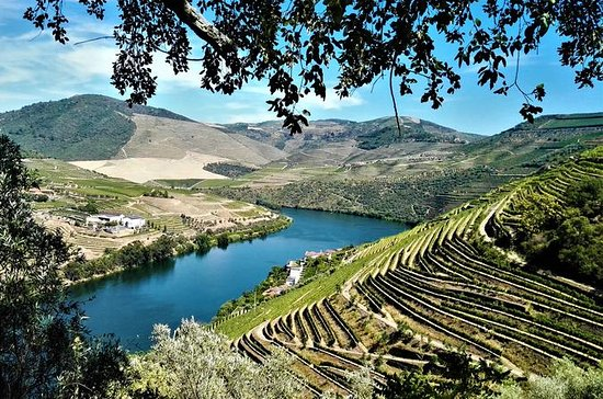Douro Valley Small Group Tour with 4...