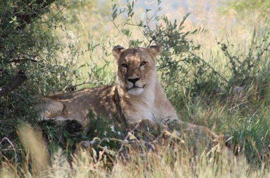 Full-Day Pilanesberg National Park...
