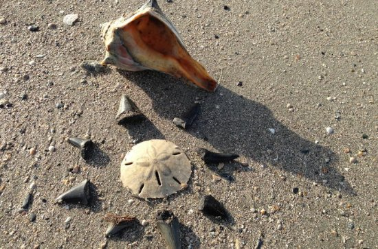 Shell Hunting Expedition en Morris...