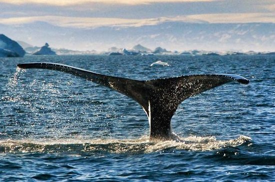 Whale Safari - Private charter 1-6...